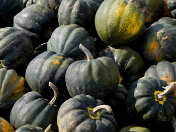 acornsquash_www.flickr.com_slash_photos_slash_garyjwood