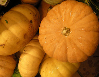 cheesepumpkinlarge_wikioticsIan_www.flickr.com_slash_photos_slash_51004712@N08